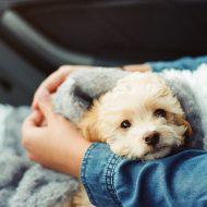 犬のがん・腫瘍、治療と食事