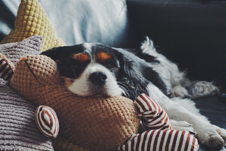 犬のがん・腫瘍