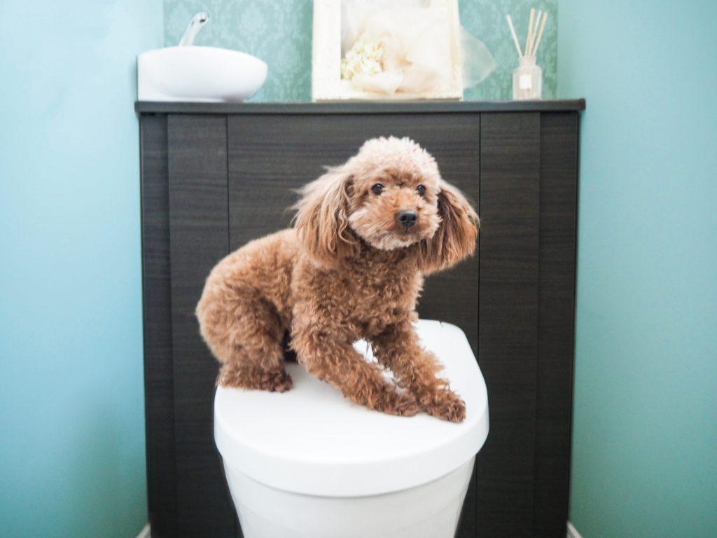 犬の下痢嘔吐