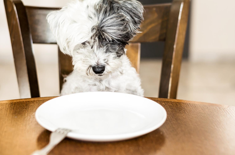 犬の食事対策
