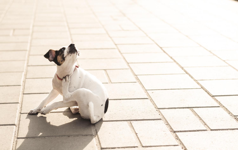 犬・かゆみ