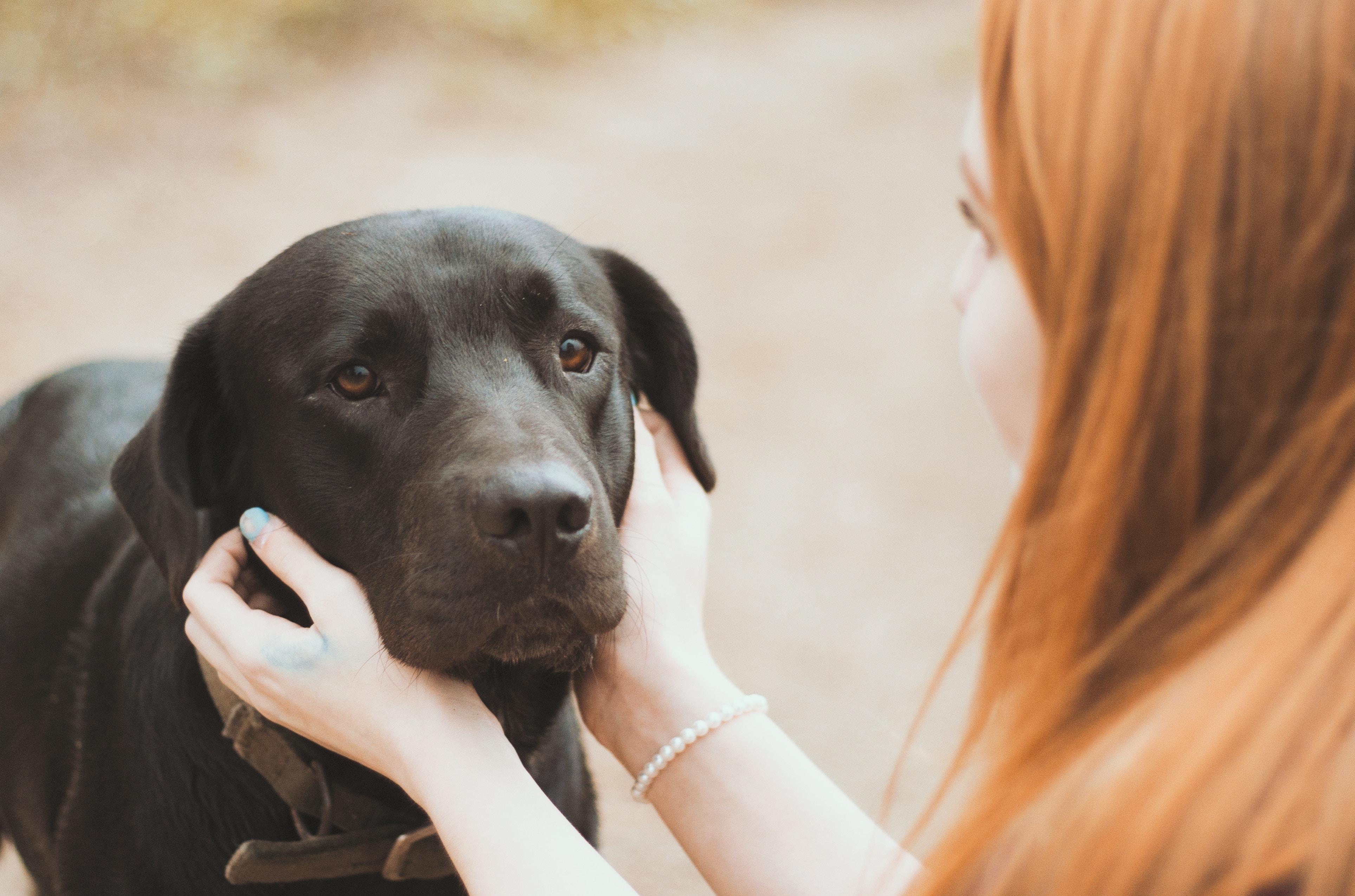 犬の皮膚がん、治療と食事