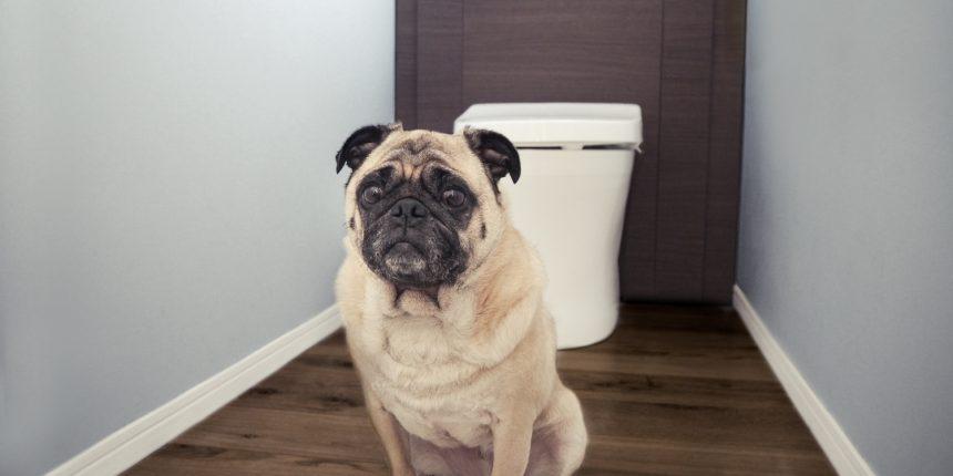 犬の消化器トラブル