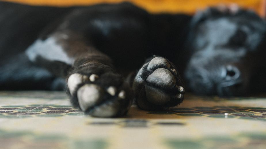 犬とストレス