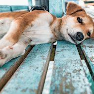 体調が悪い犬