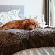 犬の病気・トラブル
