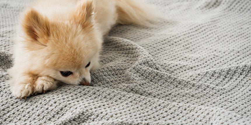 クッシング 末期 犬 症状 症候群